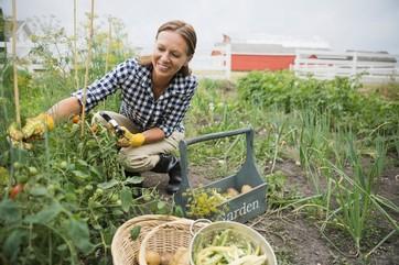 Forbici per potatura e da giardino